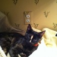 A friendly cat named Callie was lost on Arbor Lane last week. Callie is a female calico with a white stripe on her nose, see her picture for reference. She […]