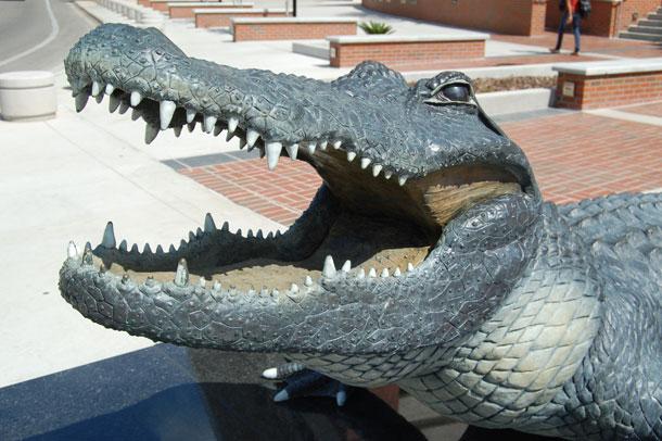 Florida Gator Football