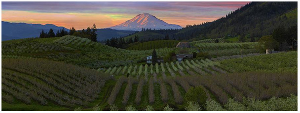 WINE WEDNESDAY TASTING: OREGON Wednesday, March 6th Any Time Between 5 – 7 PM​ $15 for a tasting of 5 wines Penner-Ash Oregon Viognier 2017 WillaKenzie Estate Willamette Valley Rosé 2018 Gran […]